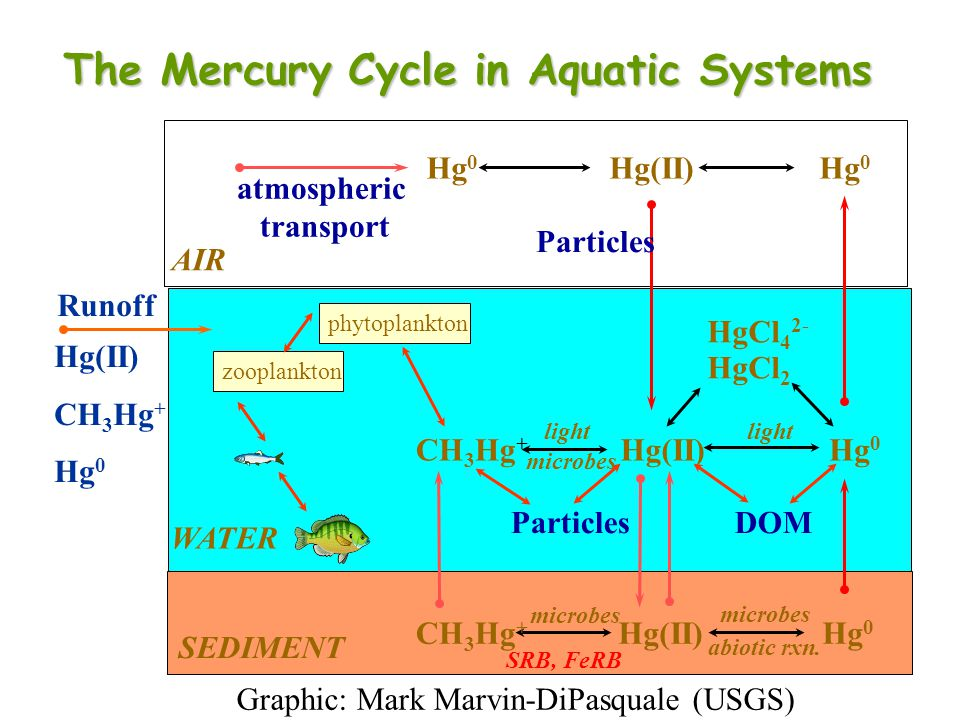 The Mercury Cycle in Aquatic Systems