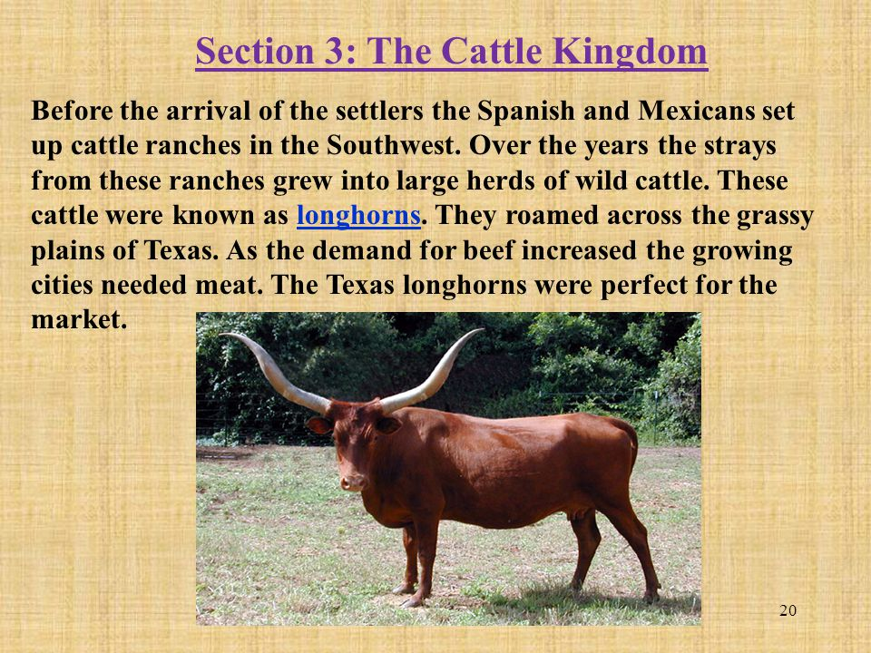 Section 3: The Cattle Kingdom