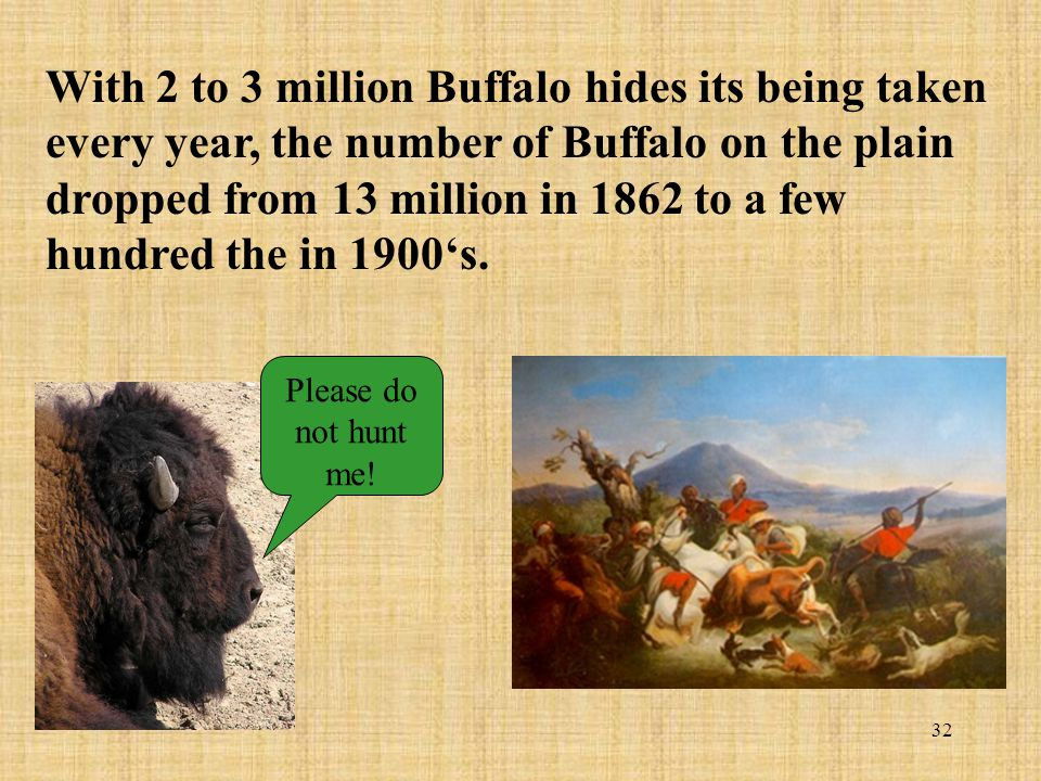 With 2 to 3 million Buffalo hides its being taken every year, the number of Buffalo on the plain dropped from 13 million in 1862 to a few hundred the in 1900's.