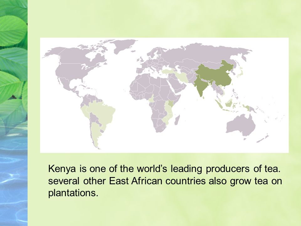 Kenya is one of the world's leading producers of tea.