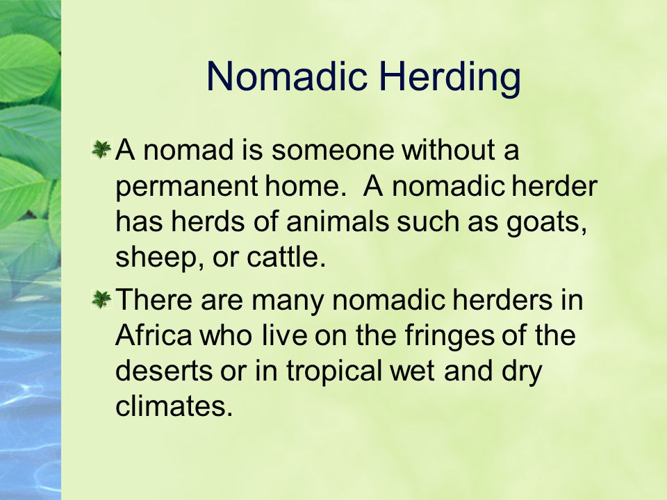 Nomadic Herding A nomad is someone without a permanent home. A nomadic herder has herds of animals such as goats, sheep, or cattle.