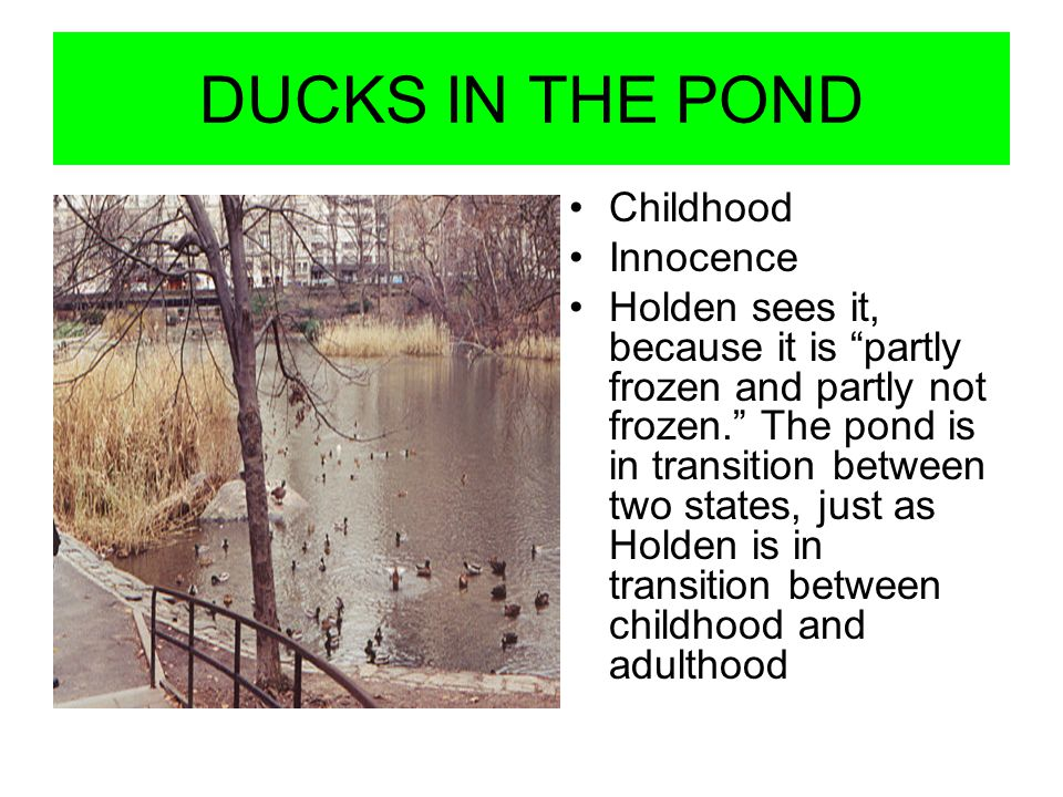 DUCKS IN THE POND Childhood Innocence