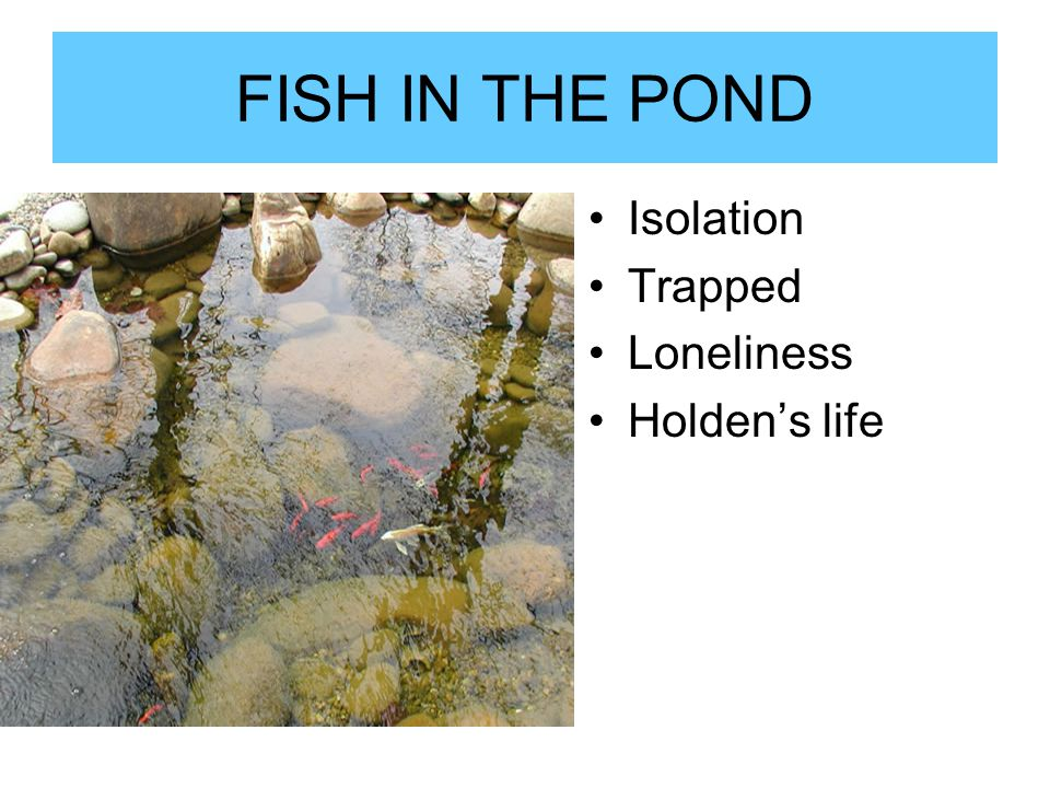 FISH IN THE POND Isolation Trapped Loneliness Holden's life