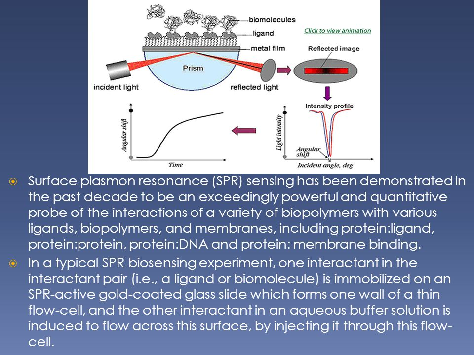 Surface plasmon resonance (SPR) sensing has been demonstrated in the past decade to be an exceedingly powerful and quantitative probe of the interactions of a variety of biopolymers with various ligands, biopolymers, and membranes, including protein:ligand, protein:protein, protein:DNA and protein: membrane binding.