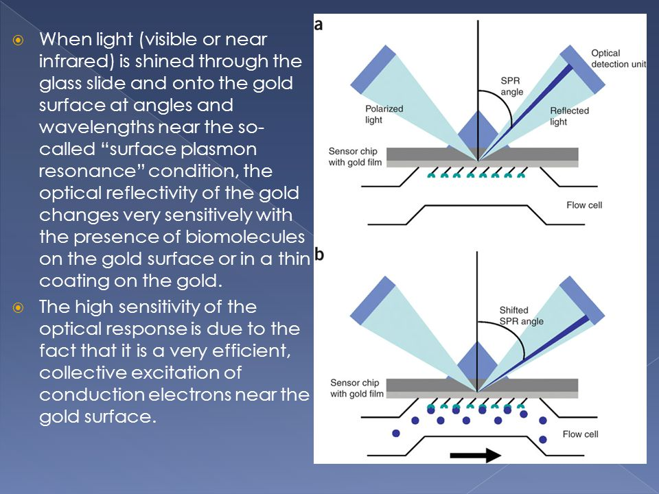 When light (visible or near infrared) is shined through the glass slide and onto the gold surface at angles and wavelengths near the so-called surface plasmon resonance condition, the optical reflectivity of the gold changes very sensitively with the presence of biomolecules on the gold surface or in a thin coating on the gold.