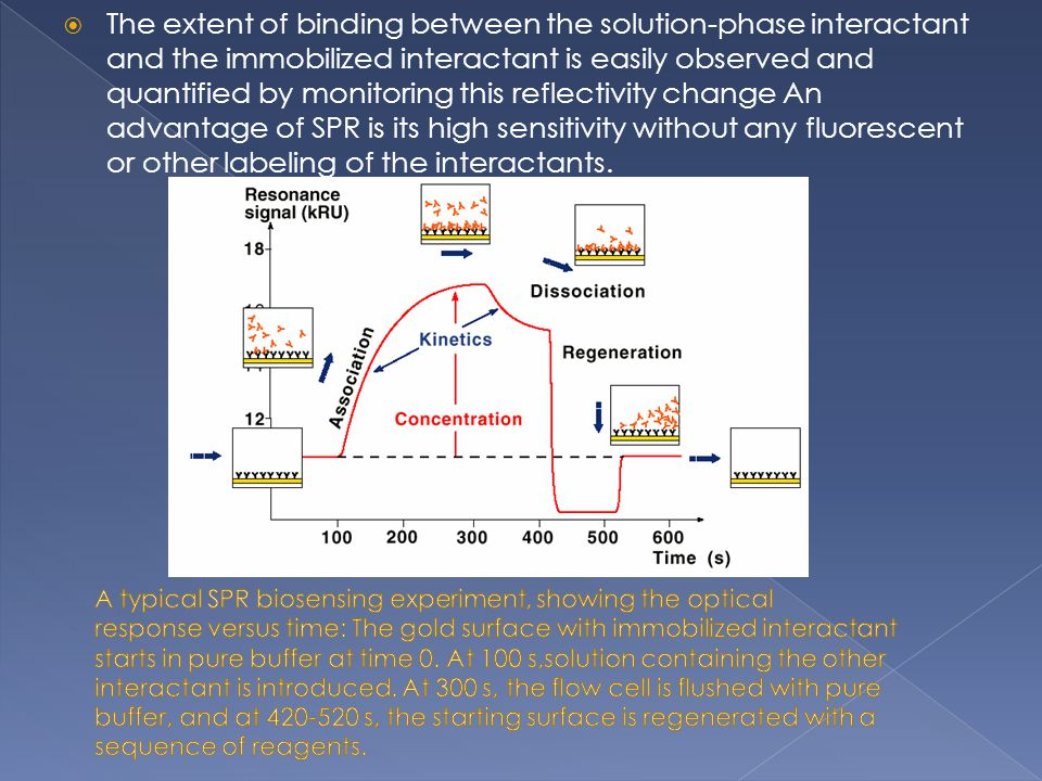 The extent of binding between the solution-phase interactant and the immobilized interactant is easily observed and quantified by monitoring this reflectivity change An advantage of SPR is its high sensitivity without any fluorescent or other labeling of the interactants.