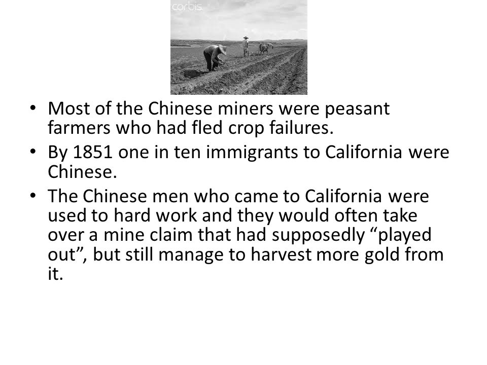 Most of the Chinese miners were peasant farmers who had fled crop failures.