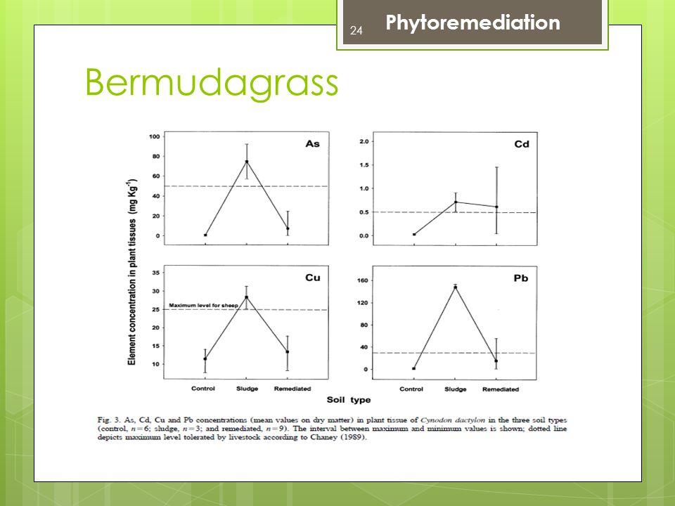 Phytoremediation Bermudagrass