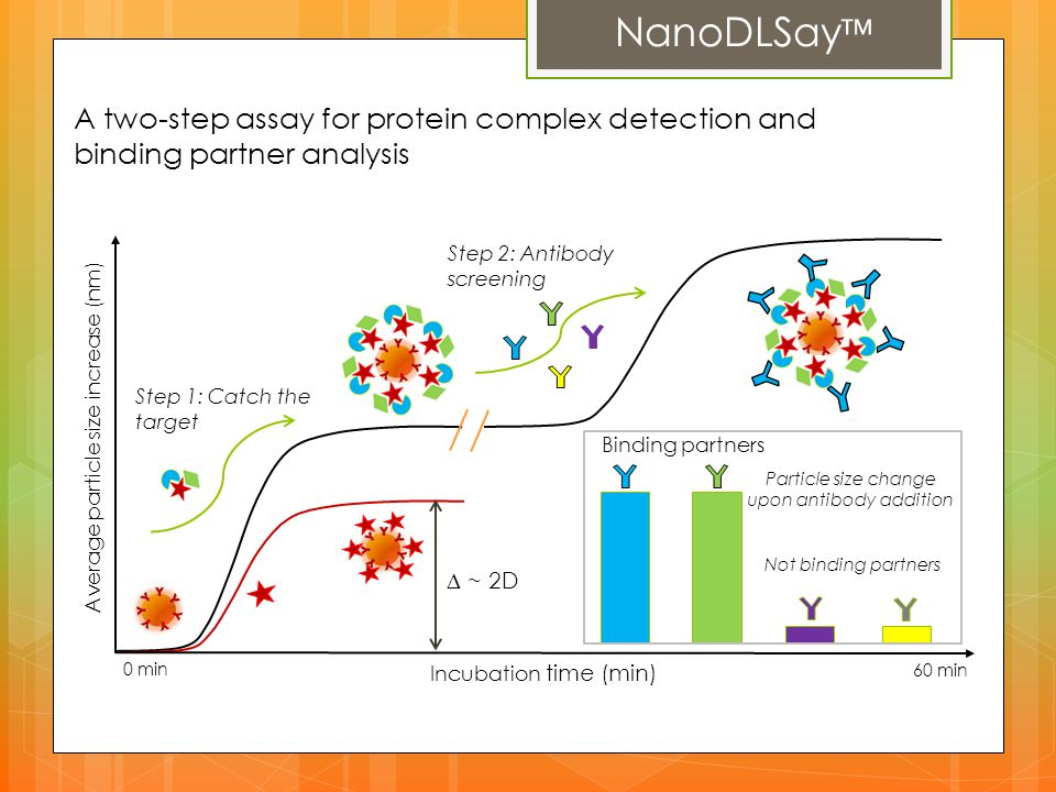 Particle size change upon antibody addition