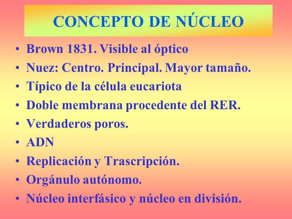 CONCEPTO DE NÚCLEO Brown 1831. Visible al óptico