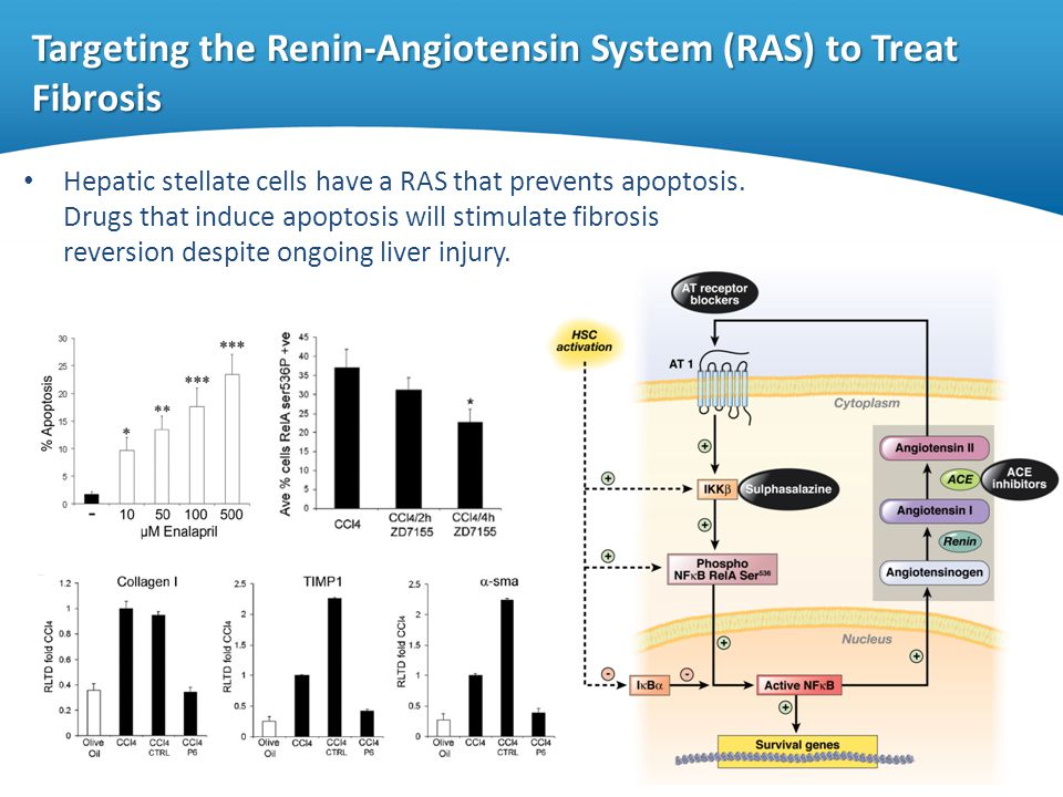 Targeting the Renin-Angiotensin System (RAS) to Treat Fibrosis