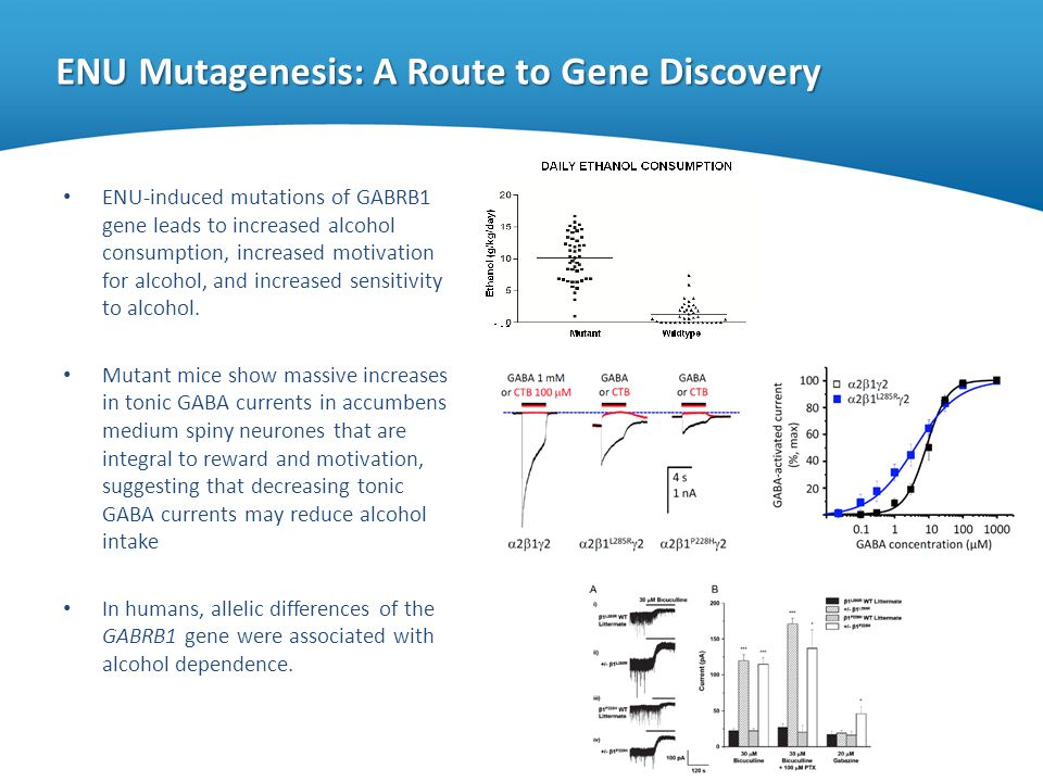 ENU Mutagenesis: A Route to Gene Discovery