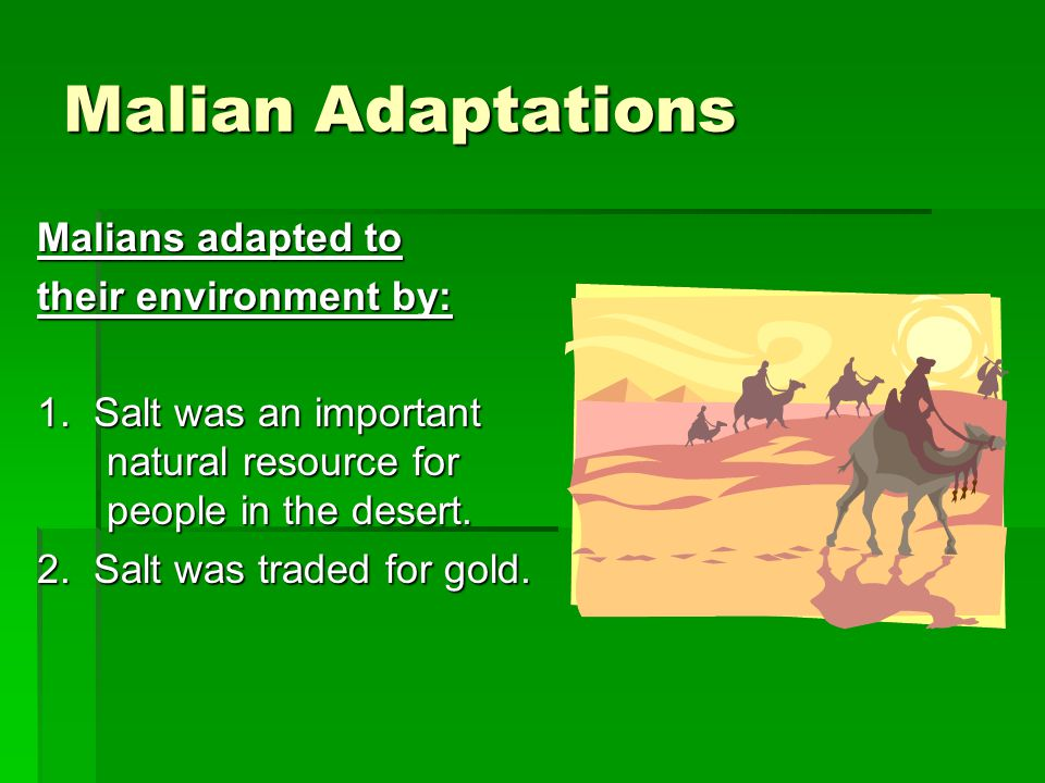 Malian Adaptations Malians adapted to their environment by: