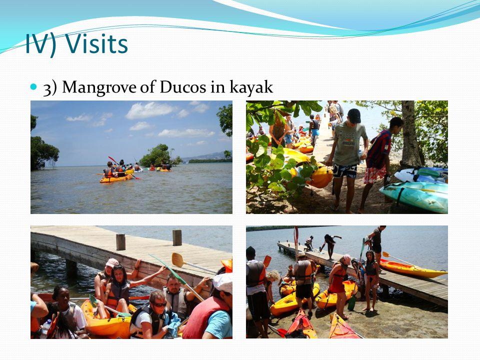 IV) Visits 3) Mangrove of Ducos in kayak