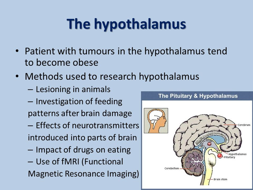 The hypothalamus Patient with tumours in the hypothalamus tend to become obese. Methods used to research hypothalamus.