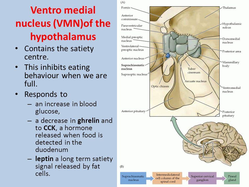 Ventro medial nucleus (VMN)of the hypothalamus