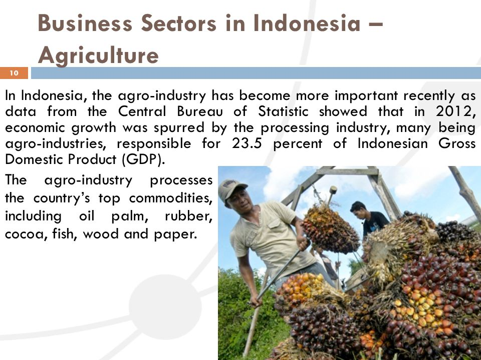 Business Sectors in Indonesia – Agriculture