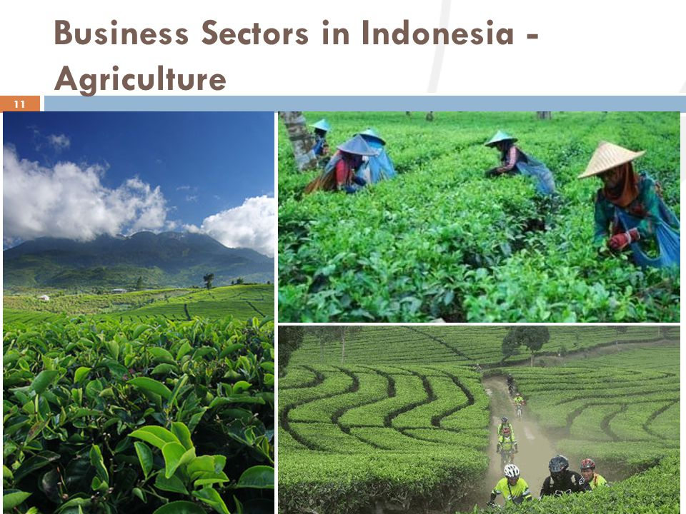 Business Sectors in Indonesia - Agriculture