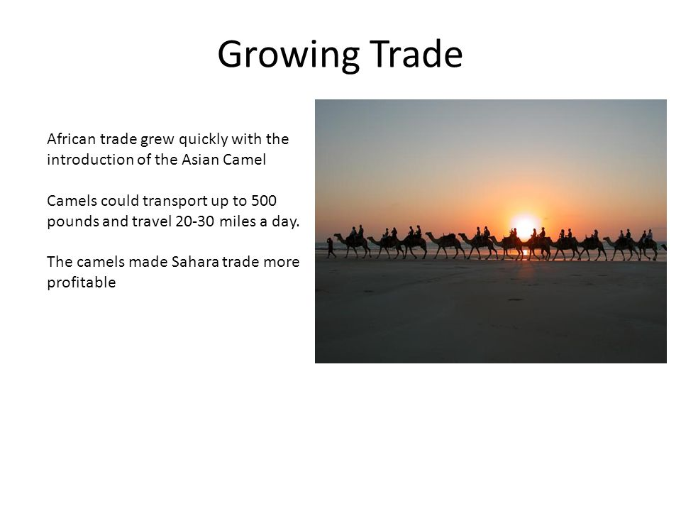 Growing Trade African trade grew quickly with the introduction of the Asian Camel.