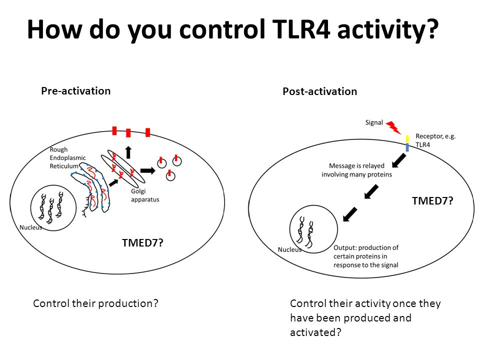 How do you control TLR4 activity