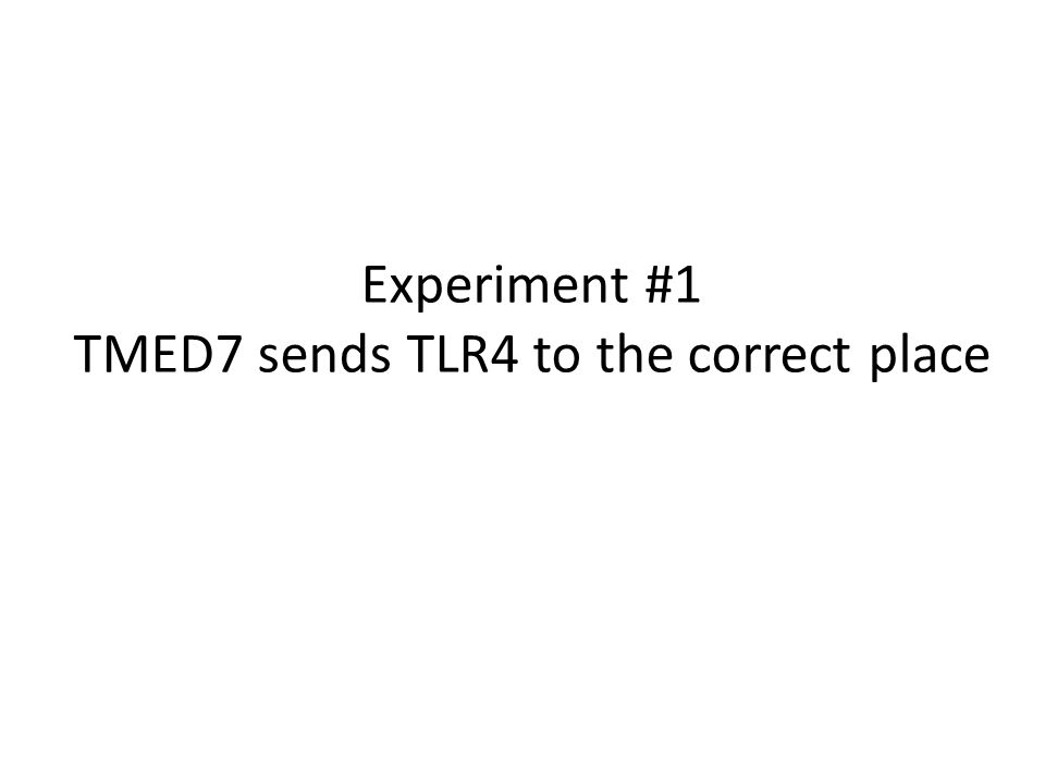 Experiment #1 TMED7 sends TLR4 to the correct place