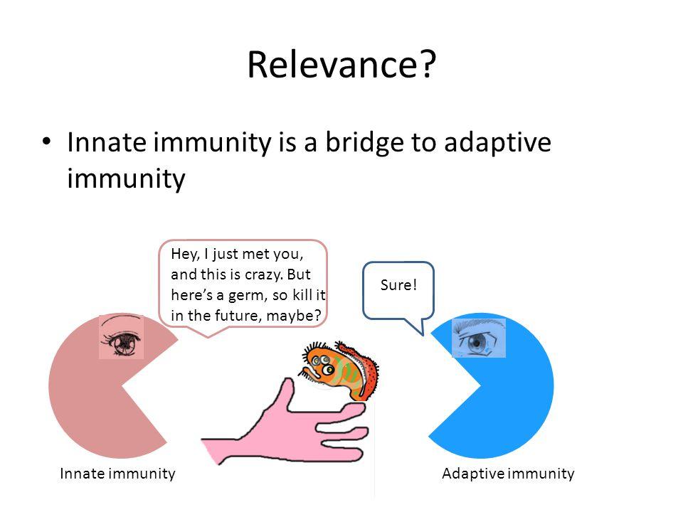 Relevance Innate immunity is a bridge to adaptive immunity