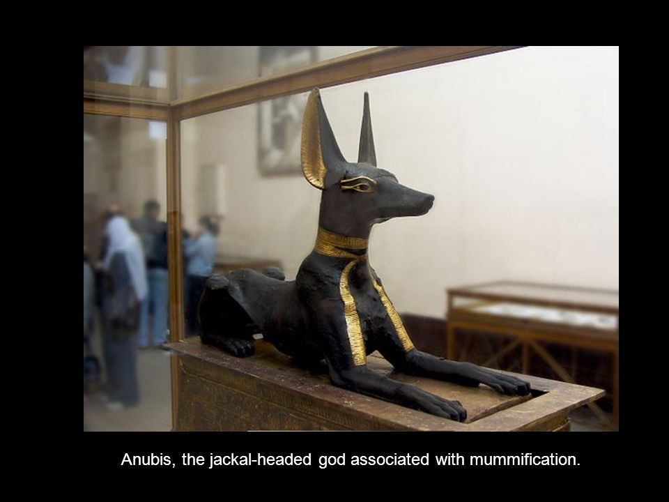 Anubis, the jackal-headed god associated with mummification.