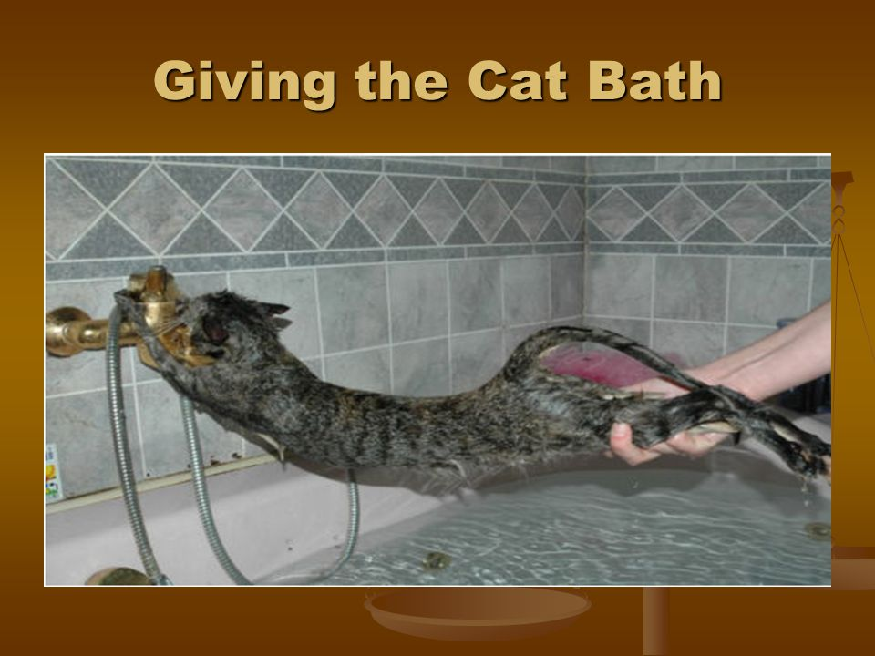 Giving the Cat Bath