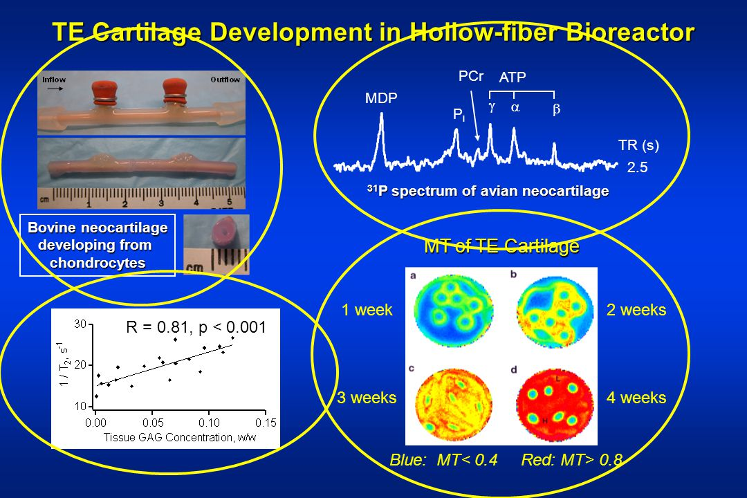 TE Cartilage Development in Hollow-fiber Bioreactor