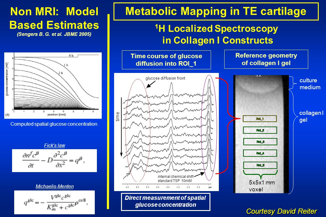 Non MRI: Model Based Estimates Metabolic Mapping in TE cartilage