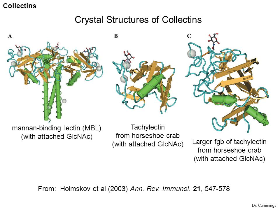 Crystal Structures of Collectins