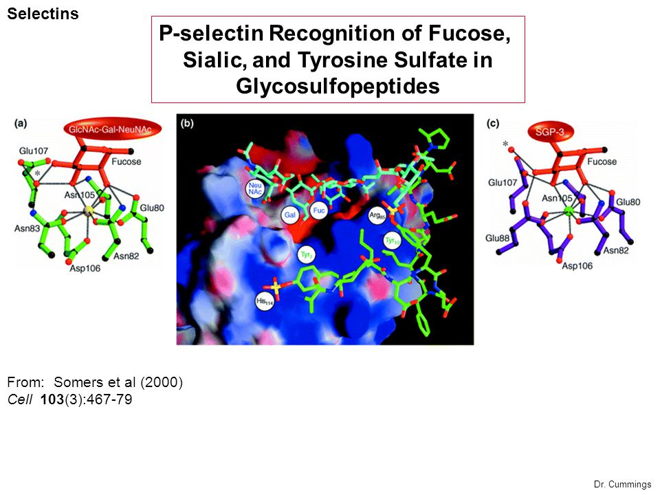 P-selectin Recognition of Fucose, Sialic, and Tyrosine Sulfate in