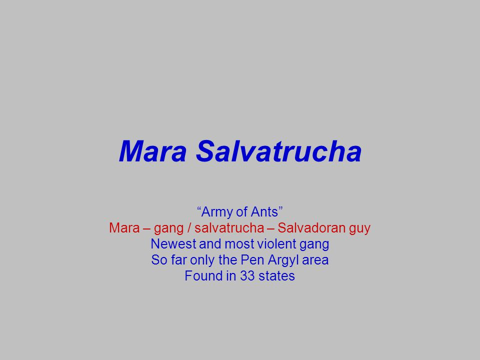 Mara Salvatrucha Army of Ants
