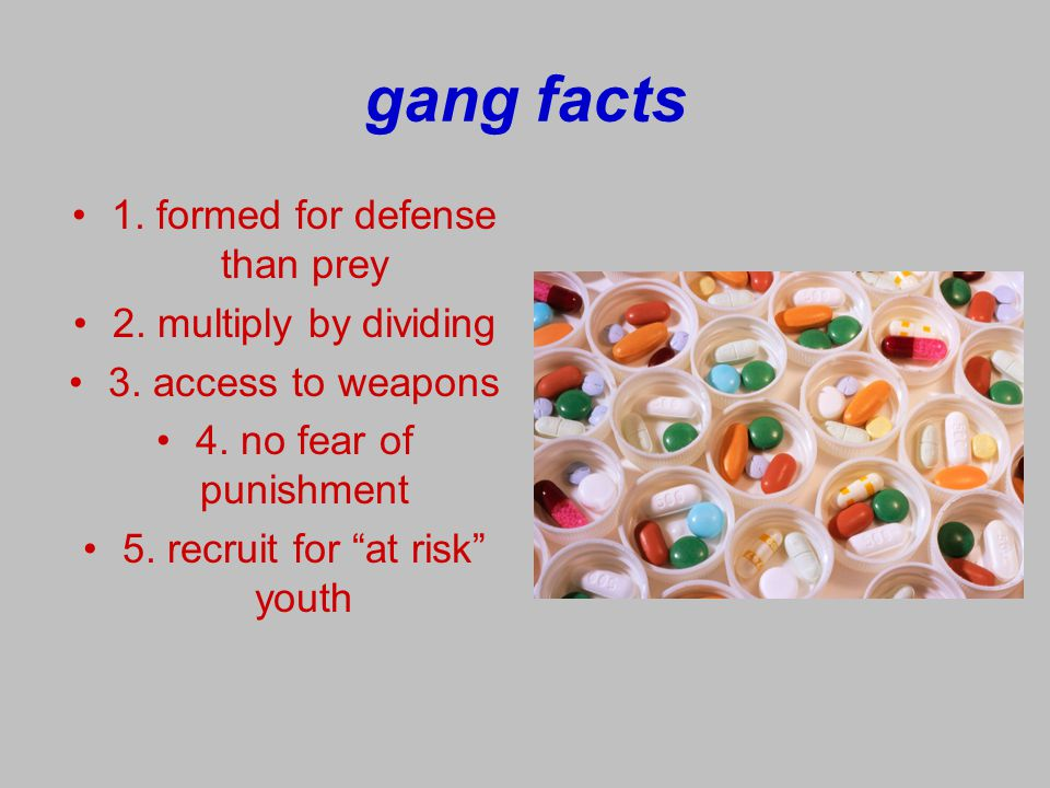gang facts 1. formed for defense than prey 2. multiply by dividing