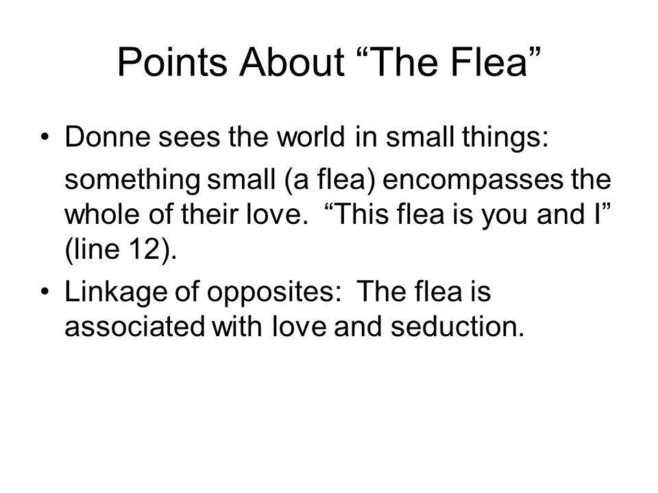 Points About The Flea