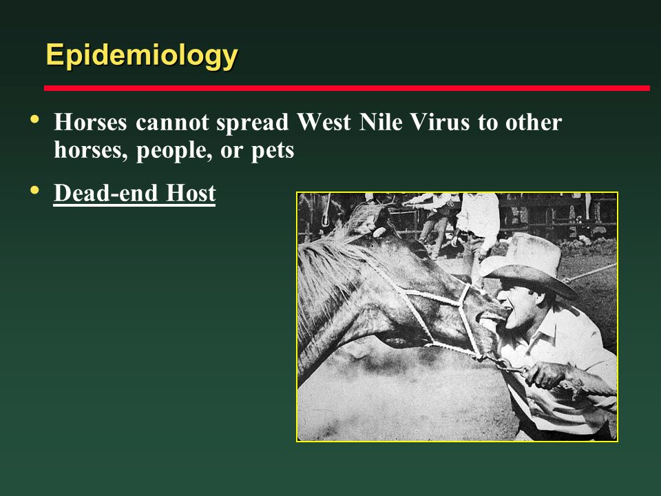 Epidemiology Horses cannot spread West Nile Virus to other horses, people, or pets Dead-end Host