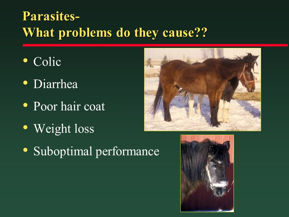 Parasites- What problems do they cause