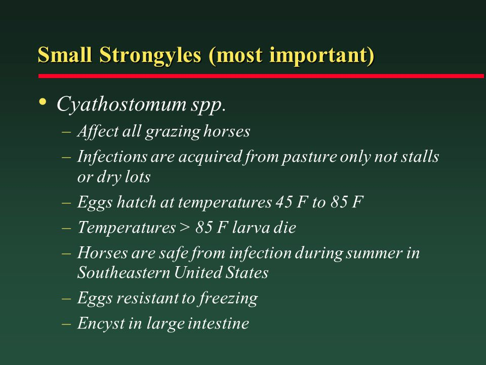 Small Strongyles (most important)