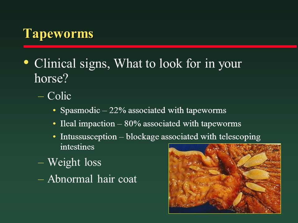 Tapeworms Clinical signs, What to look for in your horse Colic
