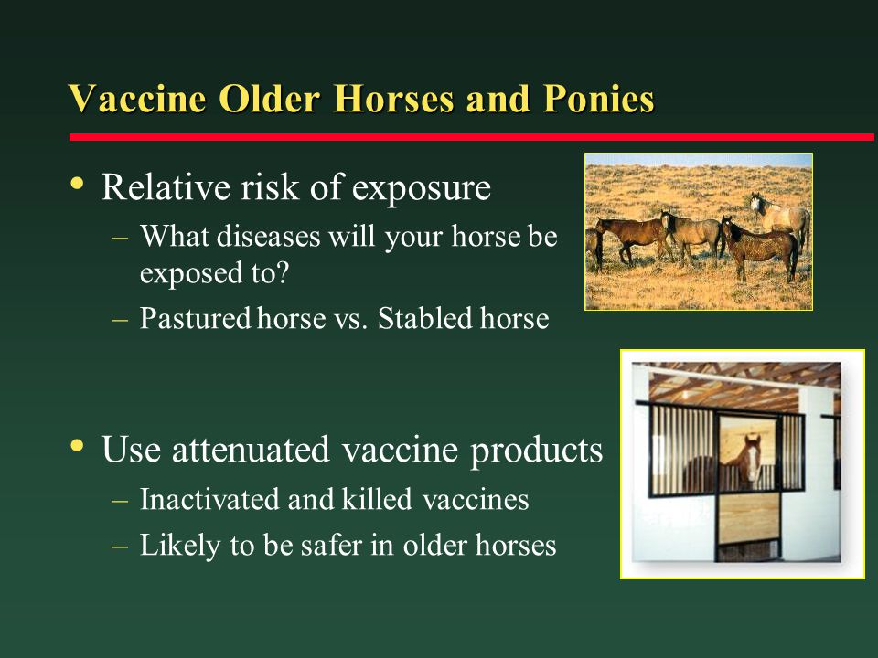 Vaccine Older Horses and Ponies