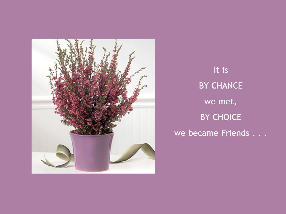 It is BY CHANCE we met, BY CHOICE we became Friends . . .