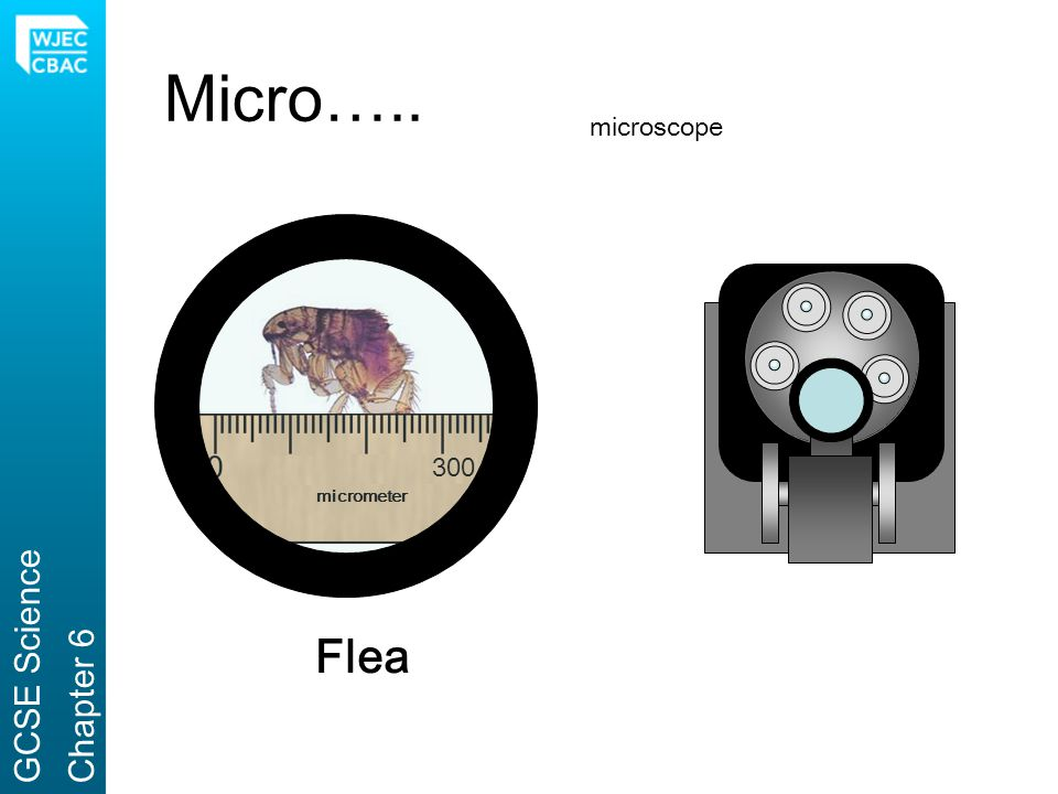 Micro….. microscope 300 micrometer GCSE Science Chapter 6 Flea