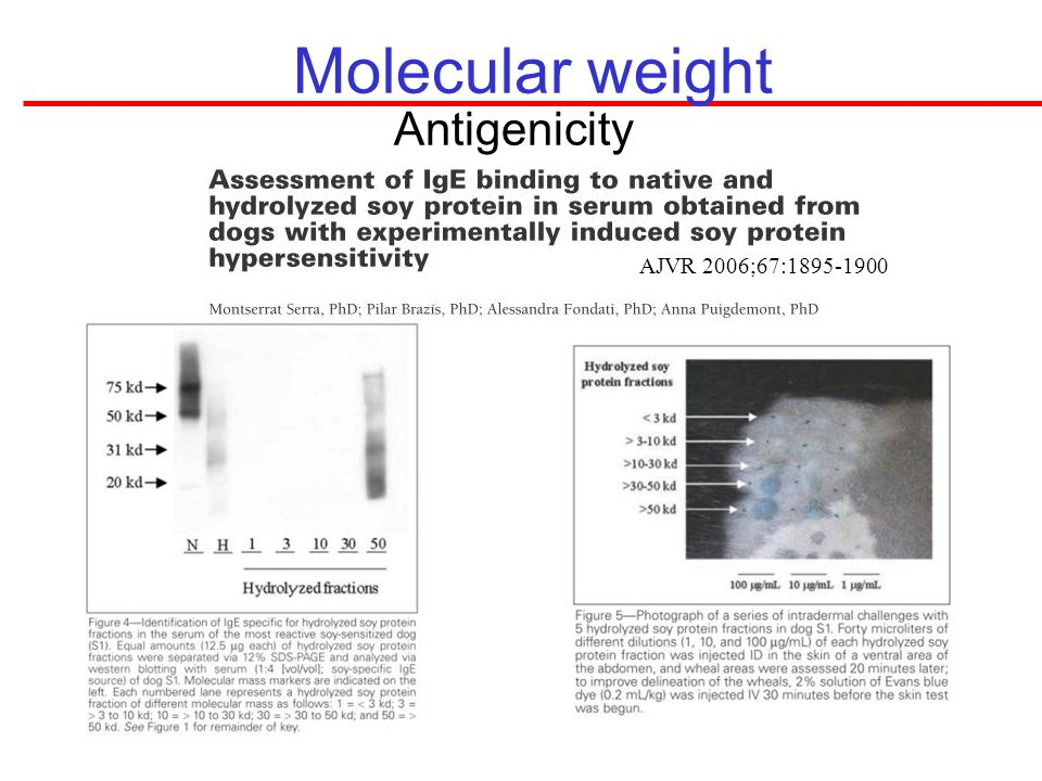 Molecular weight Antigenicity AJVR 2006;67: