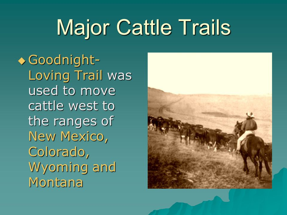 Major Cattle Trails Goodnight-Loving Trail was used to move cattle west to the ranges of New Mexico, Colorado, Wyoming and Montana.