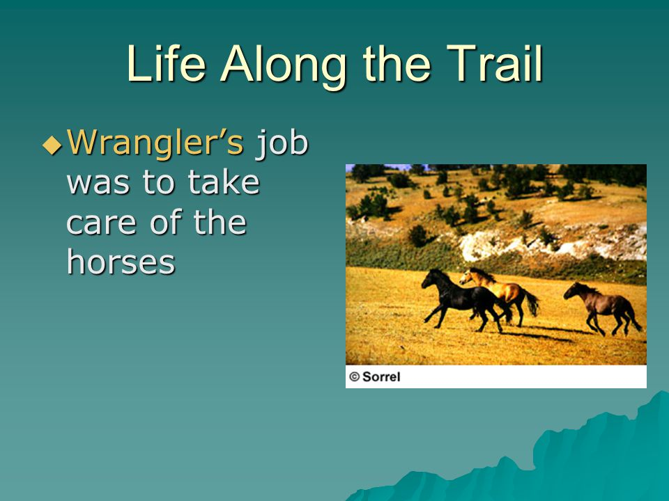 Life Along the Trail Wrangler's job was to take care of the horses