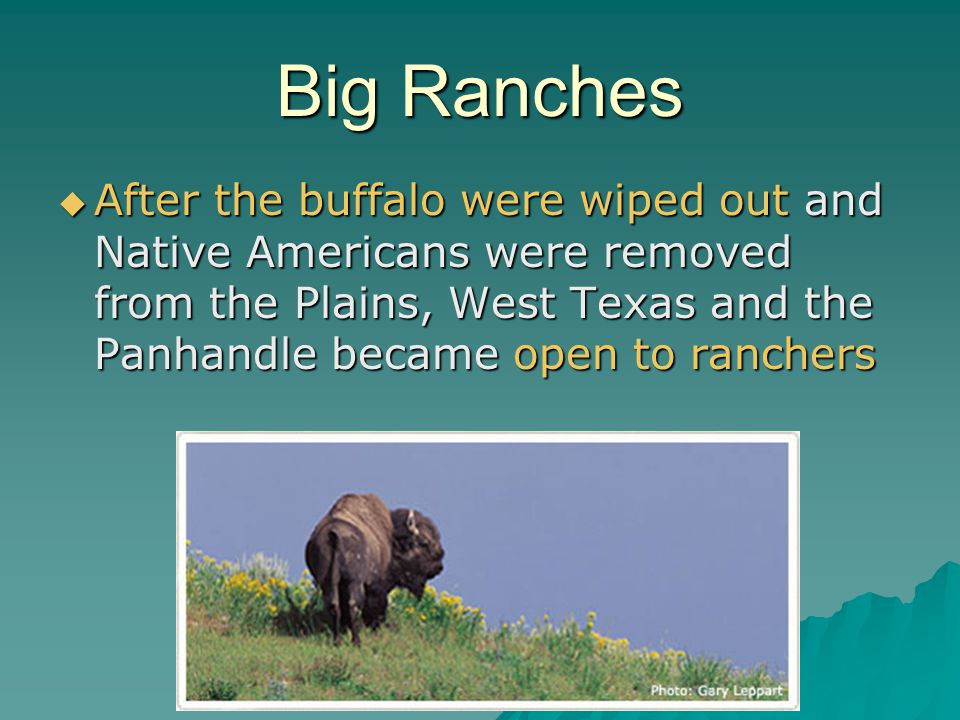 Big Ranches After the buffalo were wiped out and Native Americans were removed from the Plains, West Texas and the Panhandle became open to ranchers.