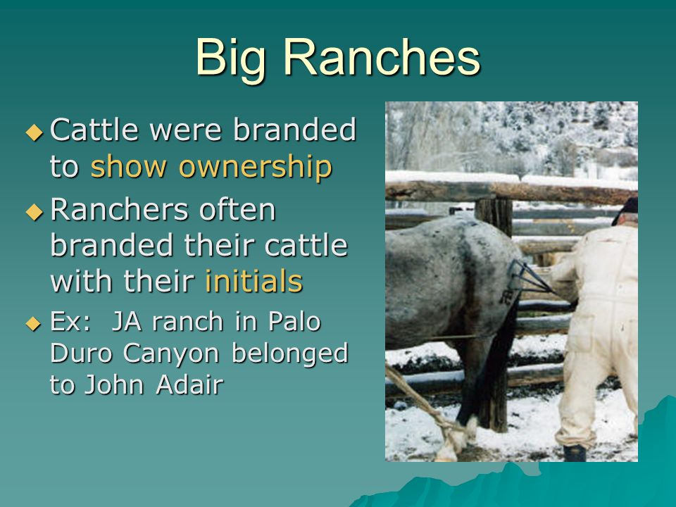 Big Ranches Cattle were branded to show ownership