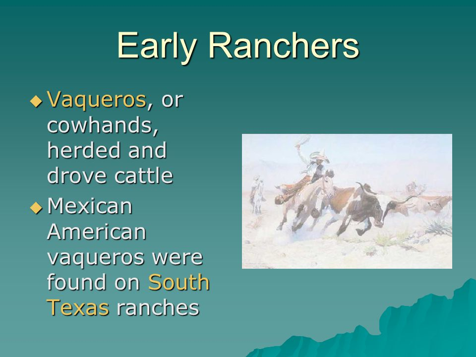 Early Ranchers Vaqueros, or cowhands, herded and drove cattle