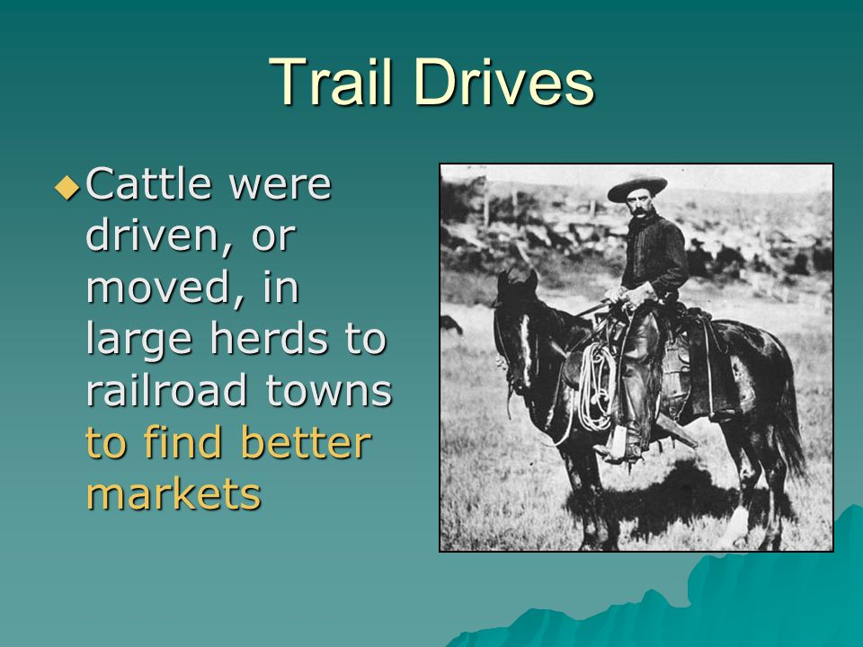 Trail Drives Cattle were driven, or moved, in large herds to railroad towns to find better markets
