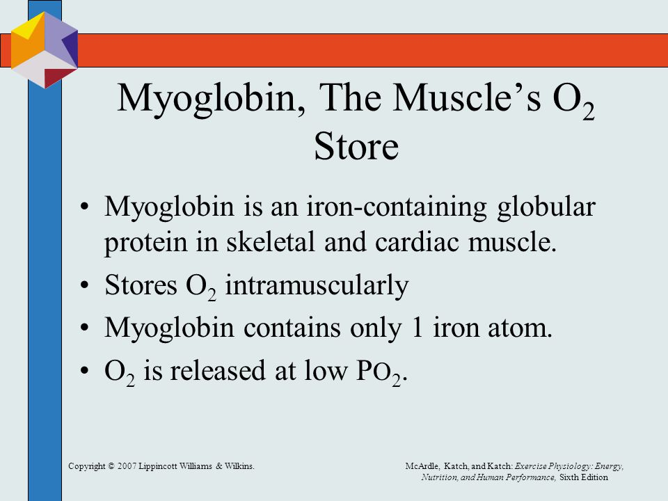 Myoglobin, The Muscle's O2 Store